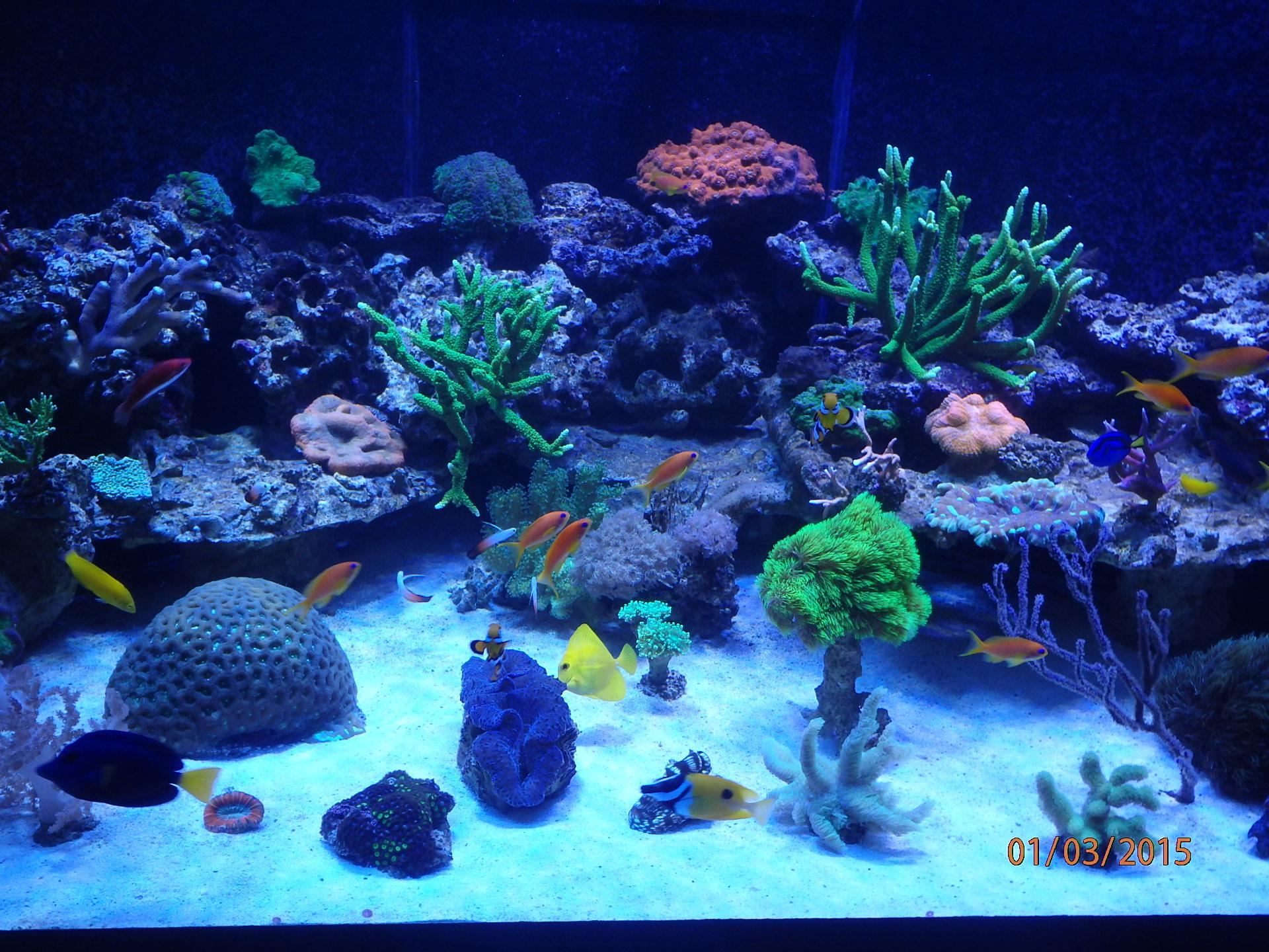 Rote >> Tonis Korallen-Zucht